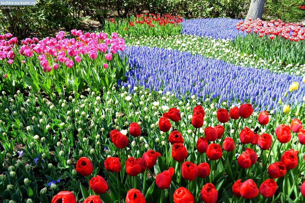 где фото картинки поляна цветов макарон своими руками